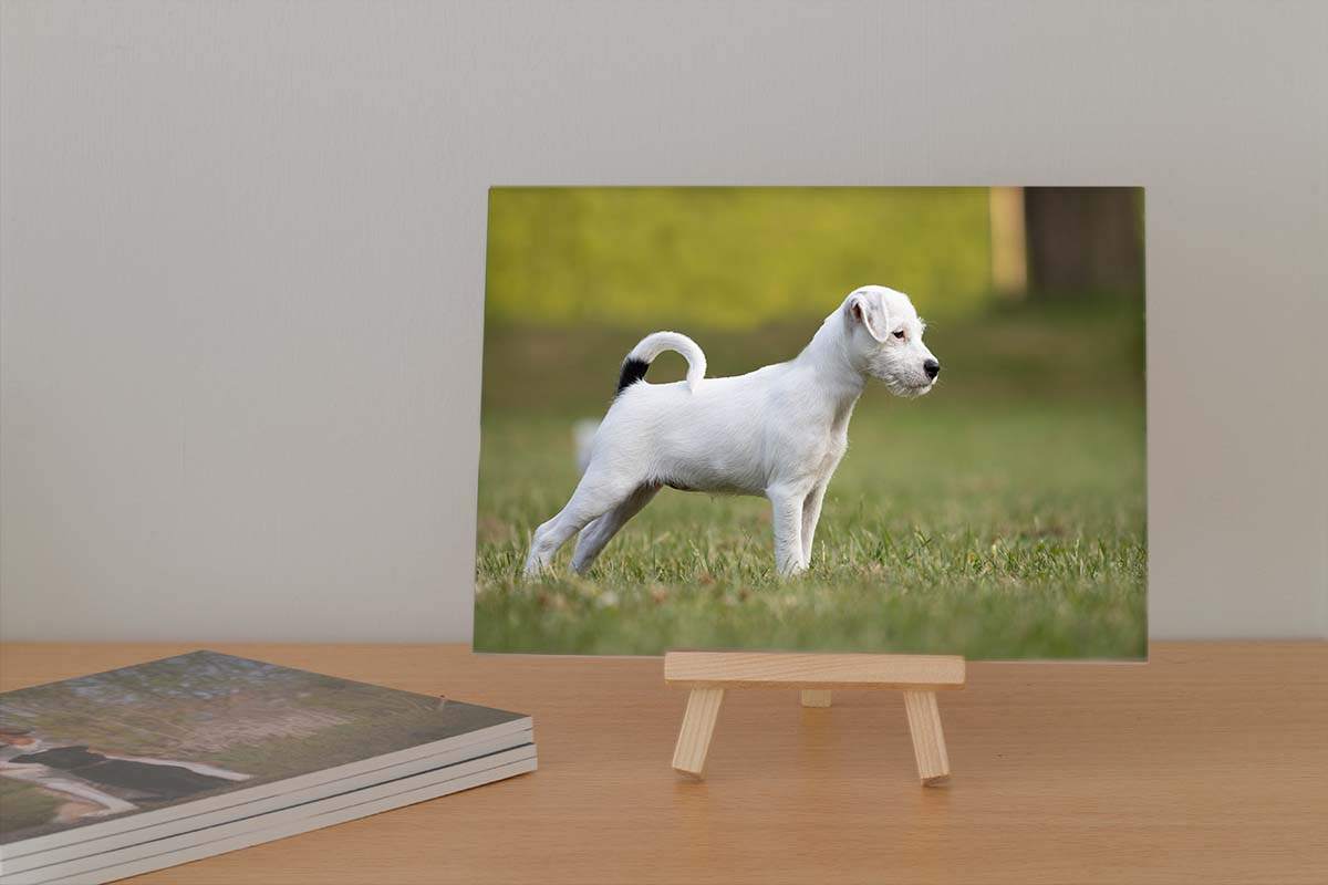 Webwinkel Animal Design Fotografie Fotokaart IMG 2164