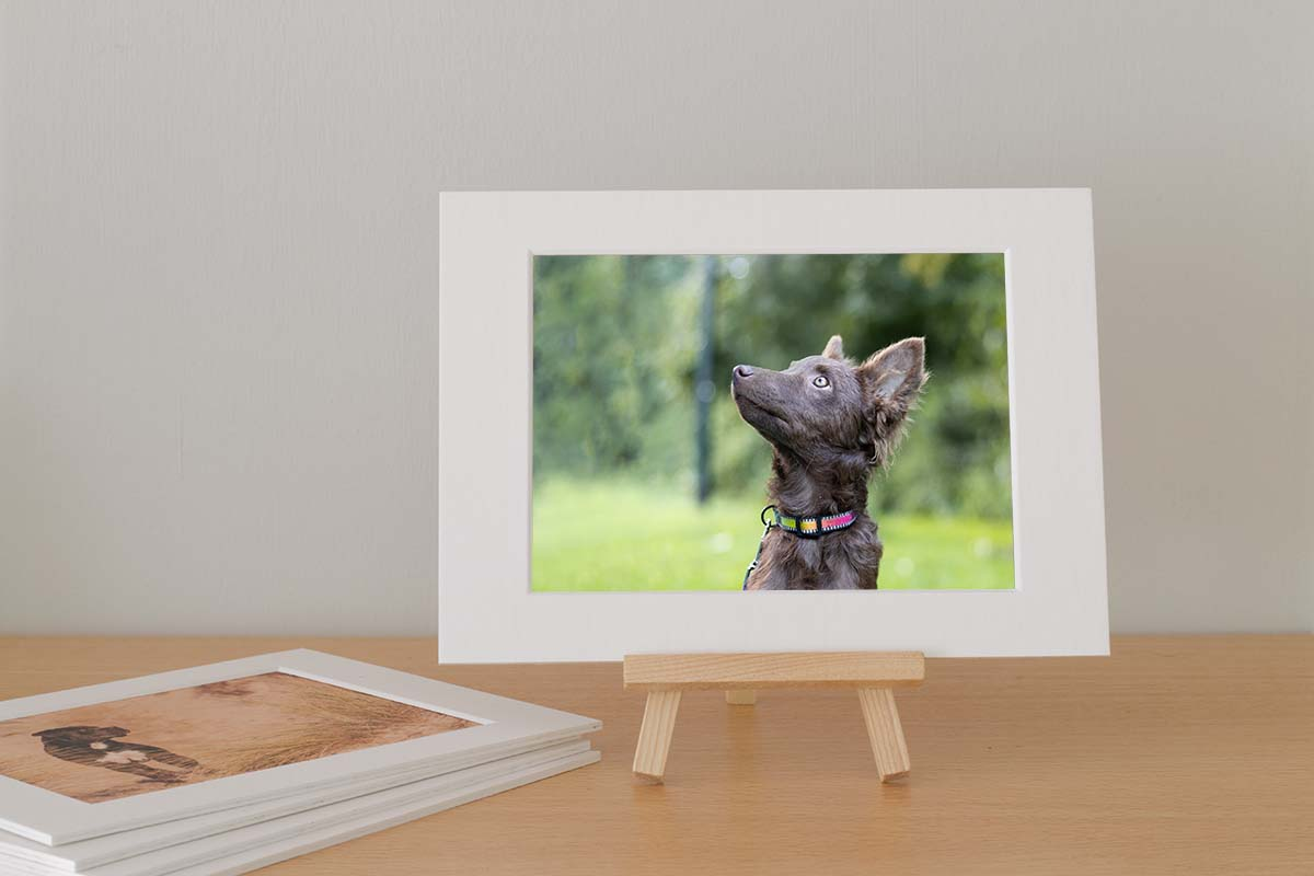 Webwinkel Animal Design Fotografie Fotokaart IMG 2166