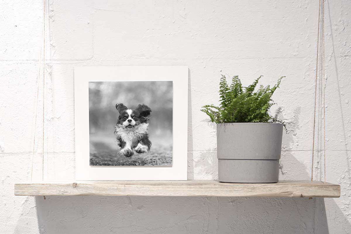 Webwinkel Animal Design Fotografie WandDecoratie 1