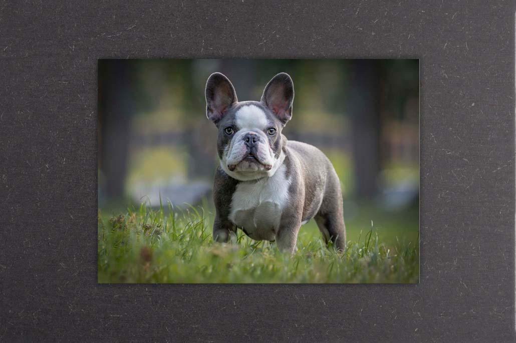 Webwinkel Animal Design Fotografie acryl mdf paneel