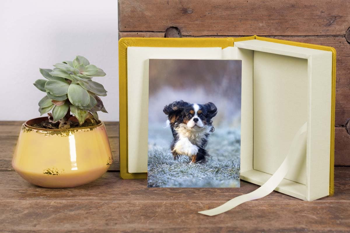 Webwinkel Animal Design Fotografie foliobox met fotokaart